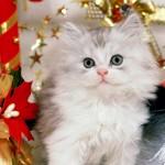 новорічна кицька